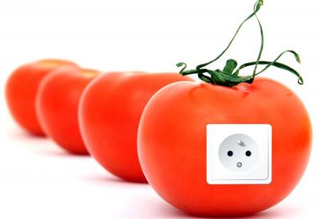 تحويل الطماطم التالفة إلى كهرباء